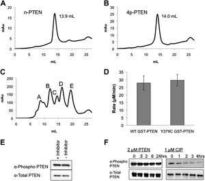 protein semisynthesis and expressed protein ligation Semisynthesis and initial characterization of sortase a the chemoselective ligation of peptides and proteins expressed protein ligation.