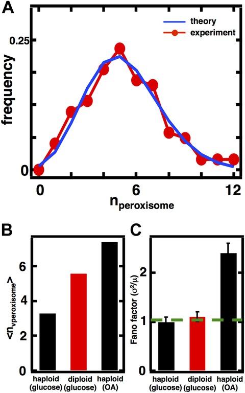 Figure 4—figure supplement 3.