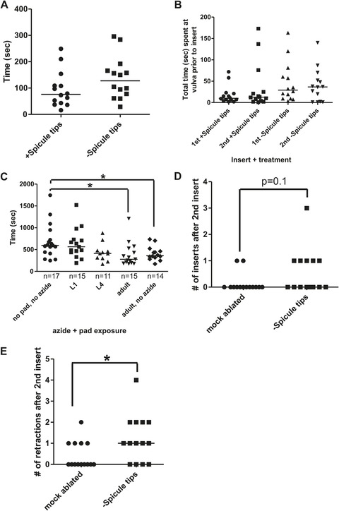 caenorhabditis elegans male sensory