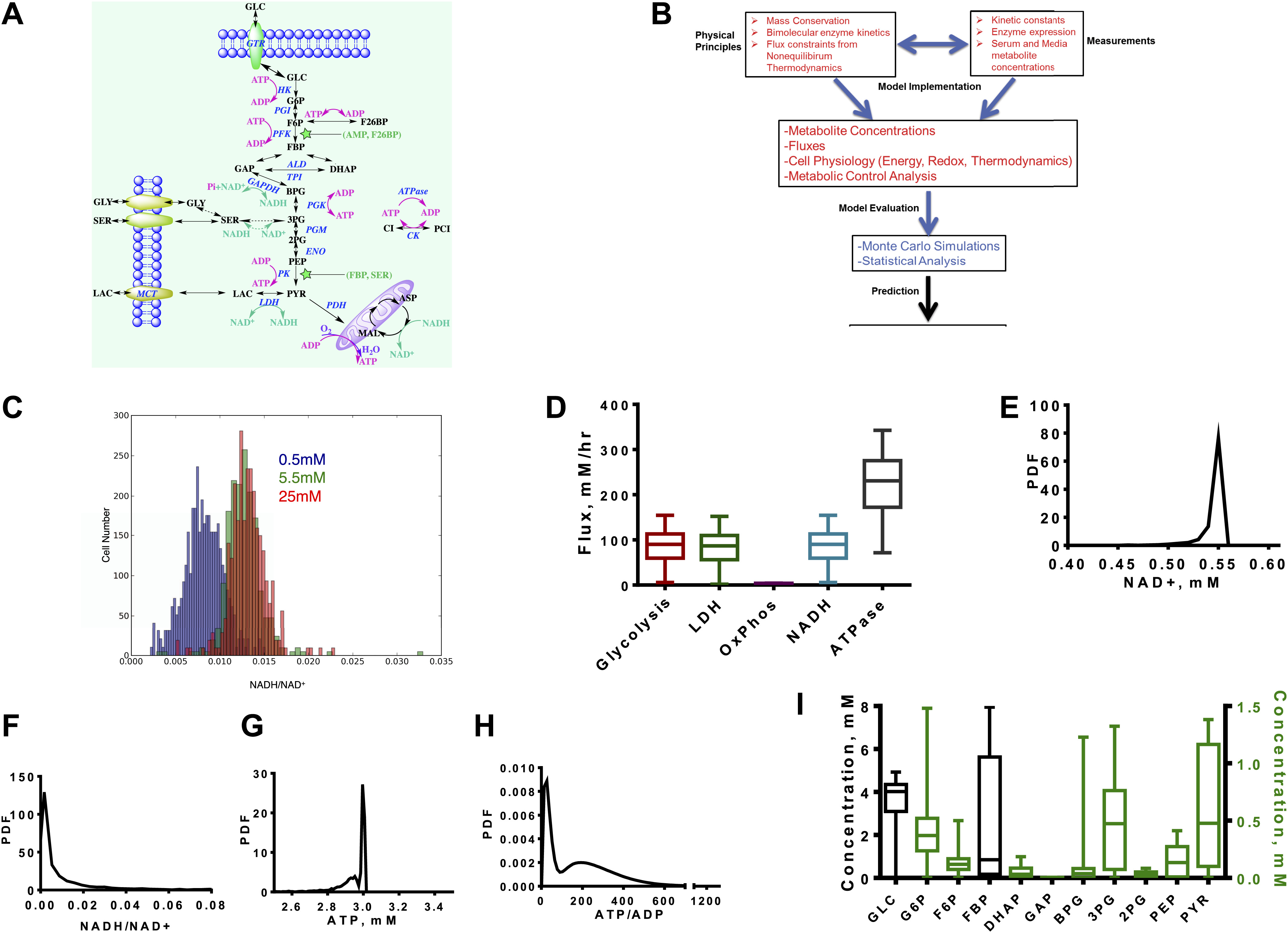 quantitative determinants of aerobic glycolysis identify flux figure 1
