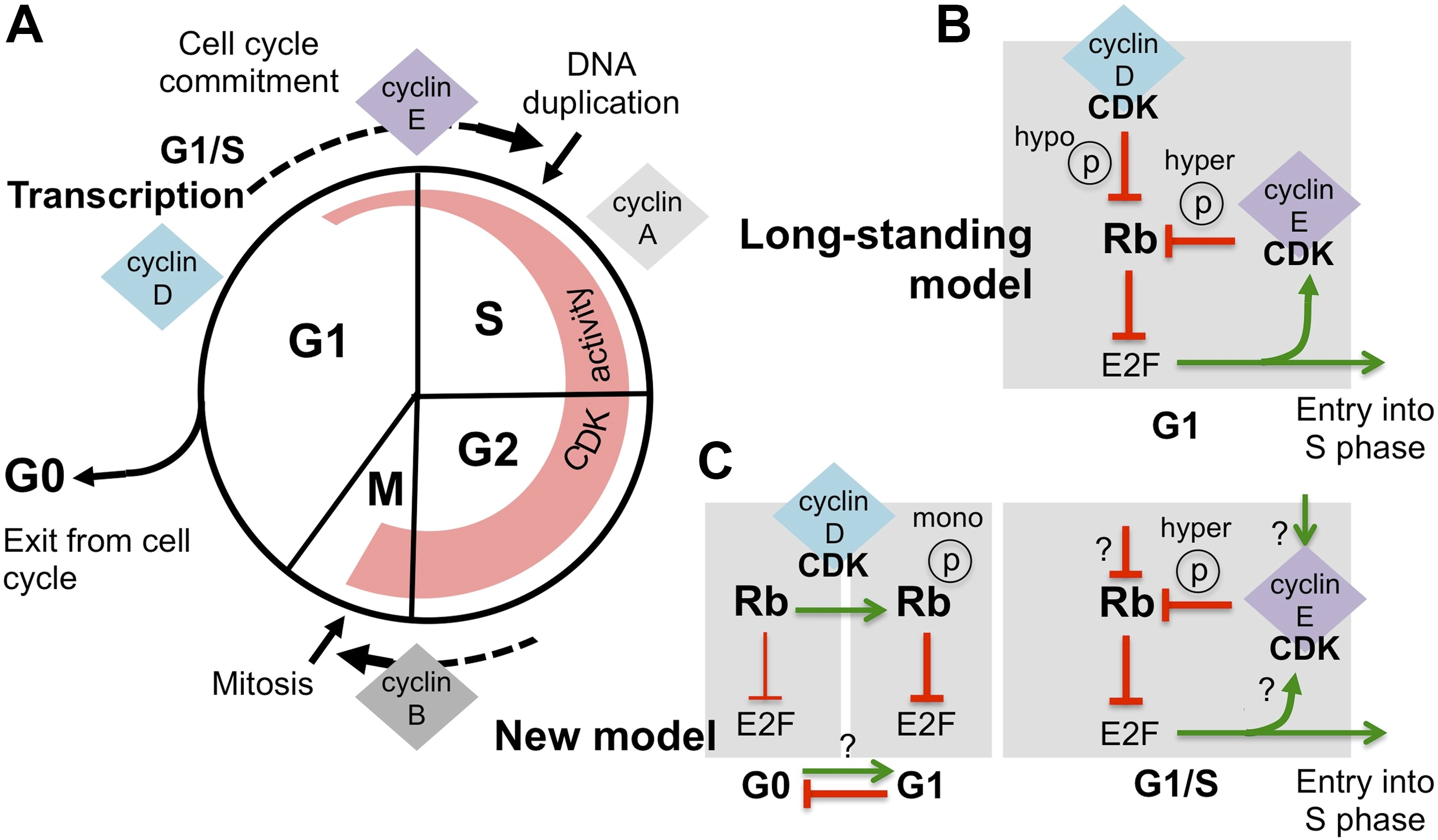 Nature Reviews Cell Cycle