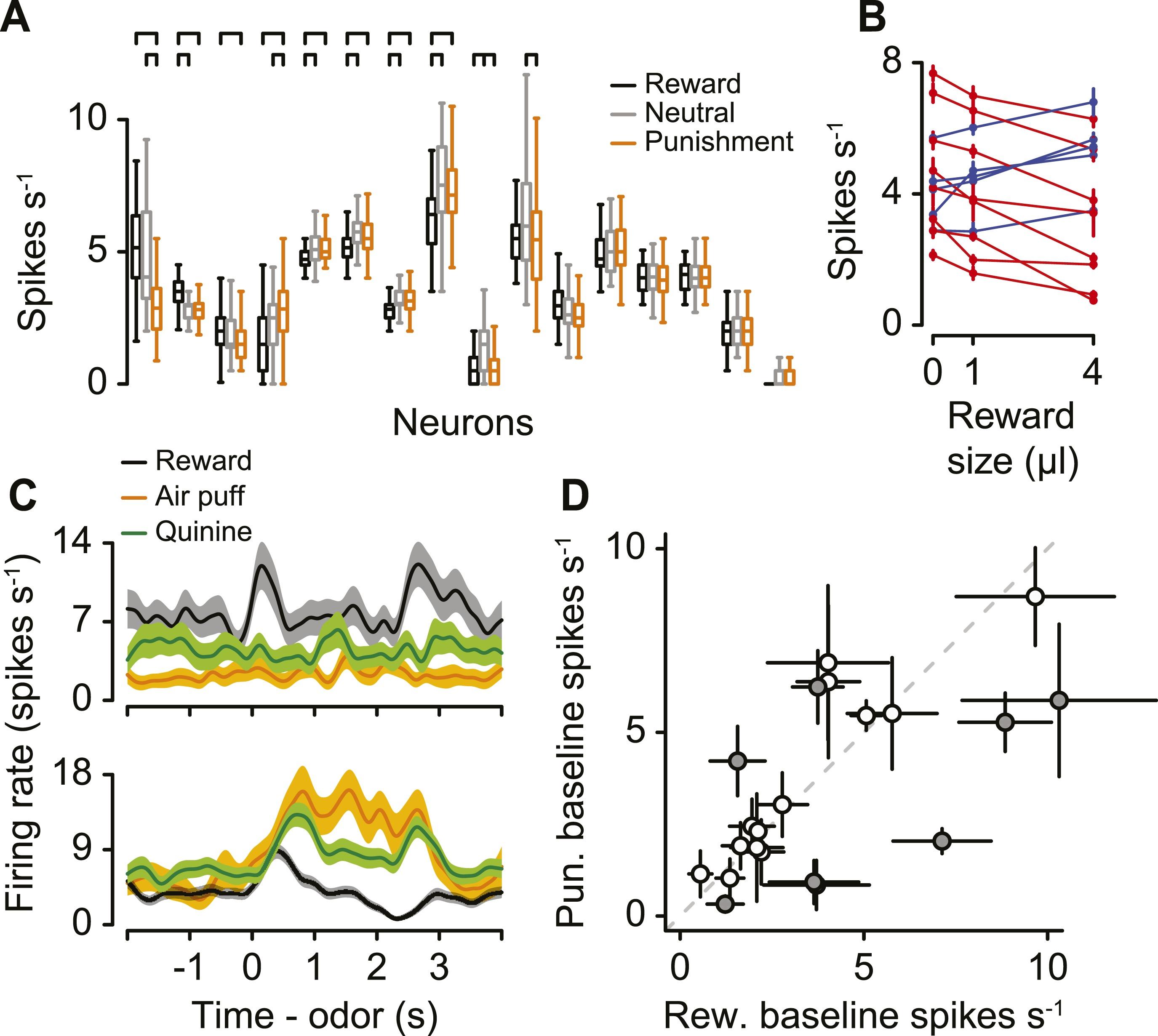 Serotonergic neurons signal reward and punishment on multiple serotonergic neurons signal reward and punishment on multiple timescales elife lens ccuart Choice Image