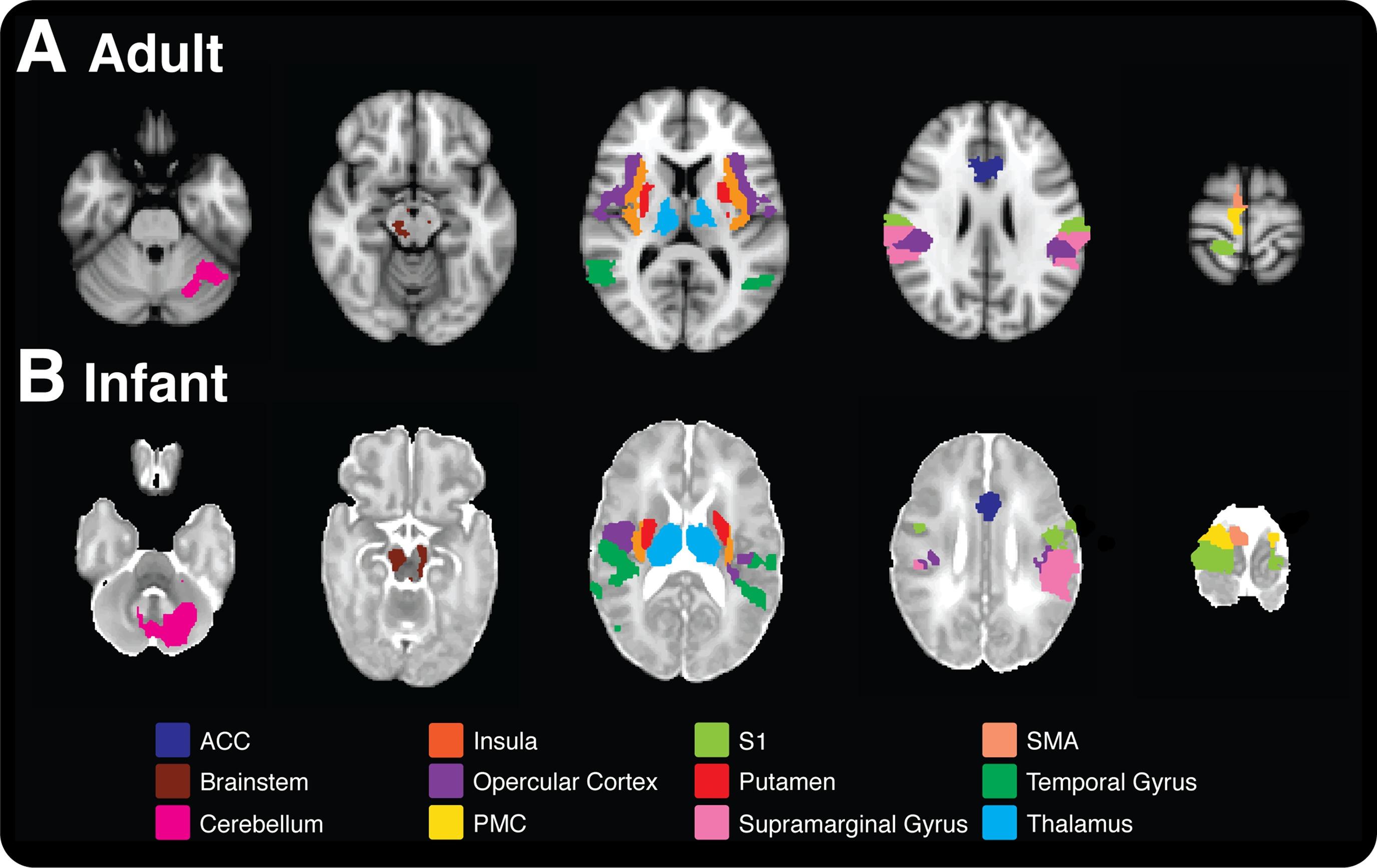 adult brain activities
