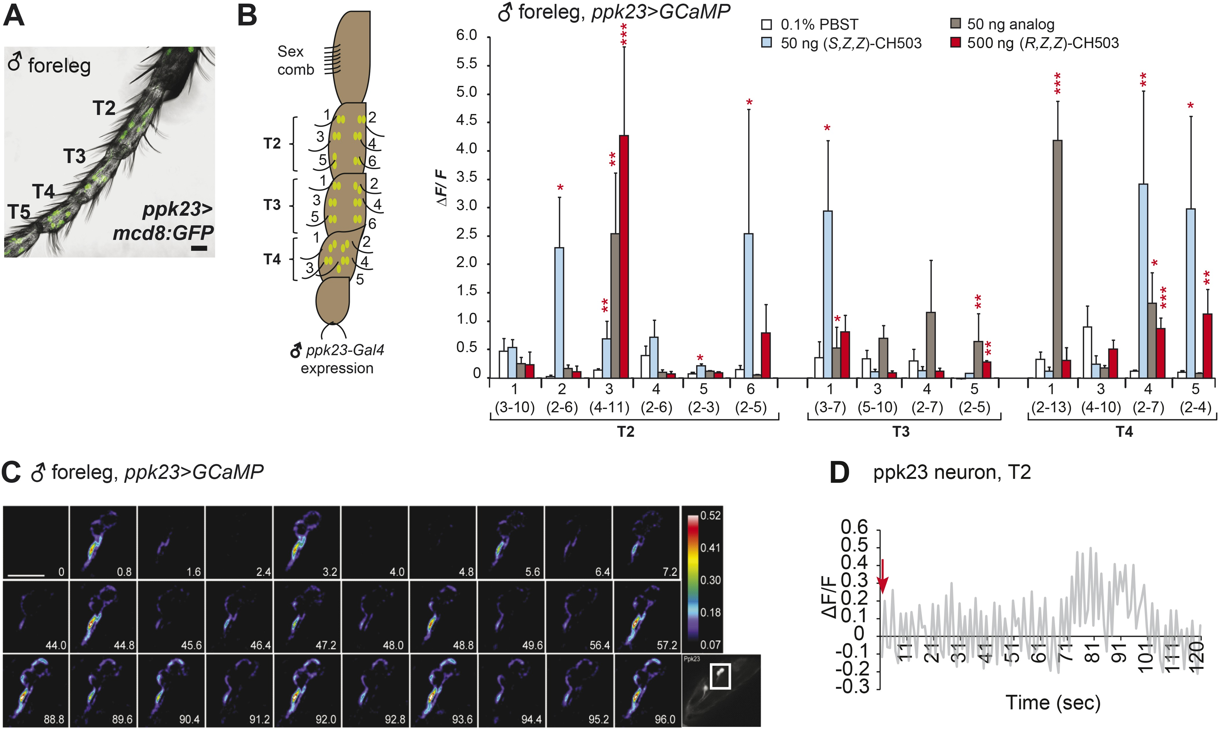 The neuropeptide tachykinin is essential for pheromone detection ...