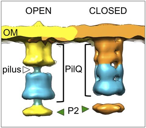 Figure 5—figure supplement 1.