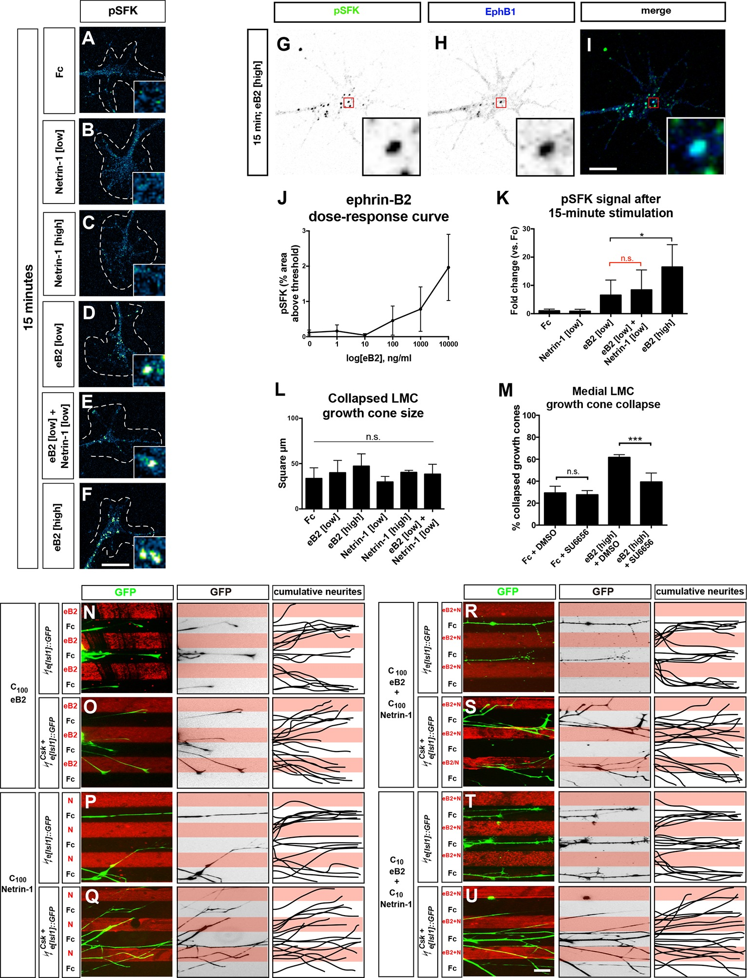 Synergistic integration of Netrin and ephrin axon guidance signals