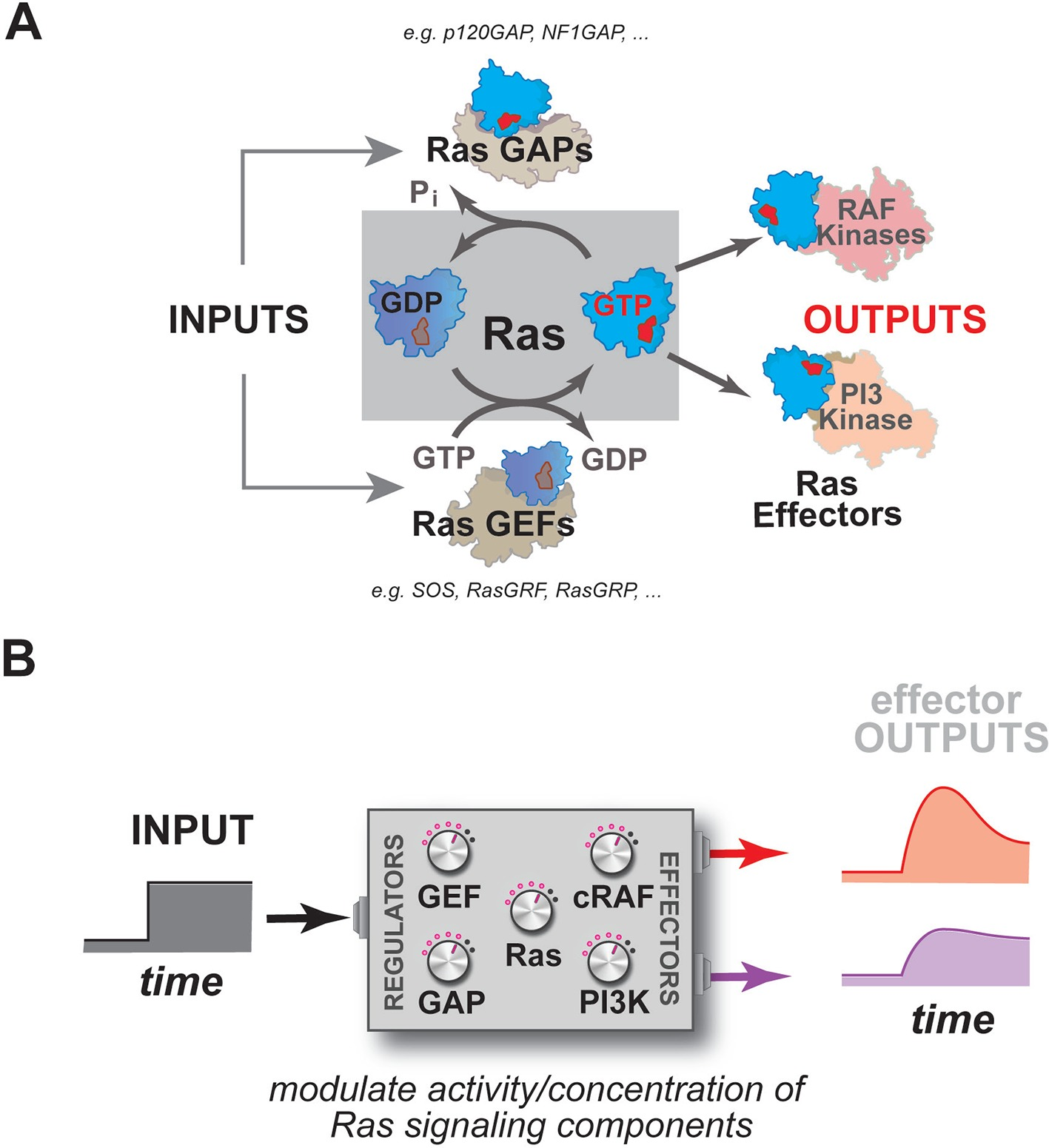 Mapping The Functional Versatility And Fragility Of Ras