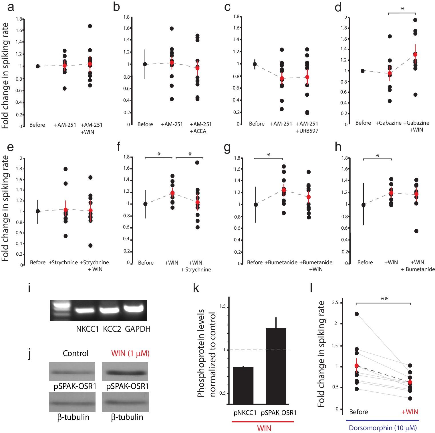 Endocannabinoid signaling enhances visual responses through