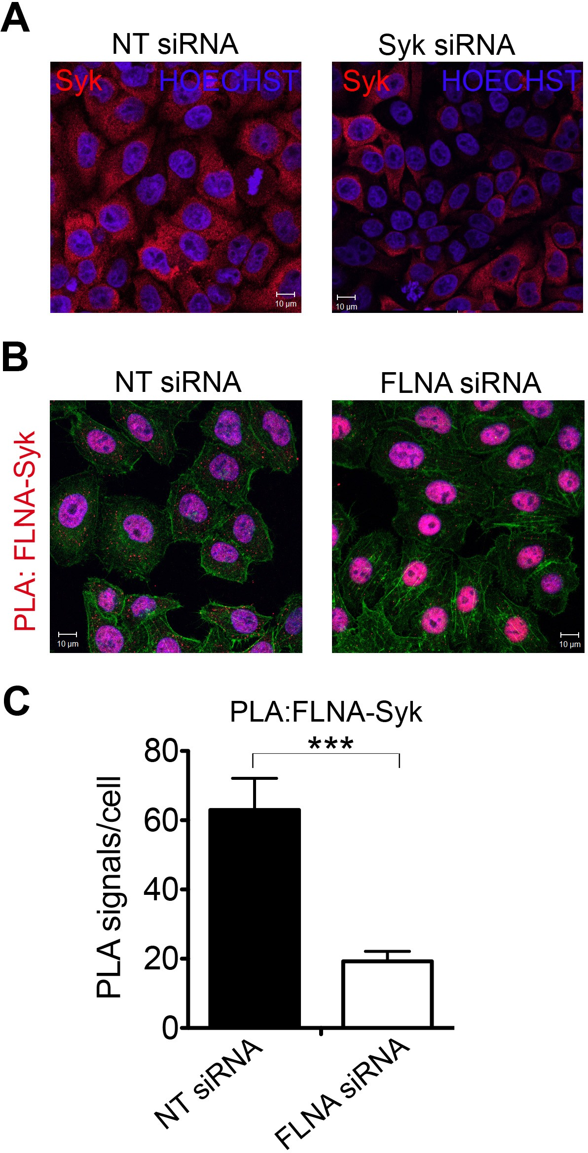 DPP Is A Novel Component Of The Nend Rule Pathway Targeting The - Pla relay working principle