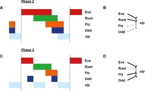 Appendix 1—figure 2—figure supplement 1.
