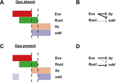 Appendix 2—figure 1—figure supplement 2.