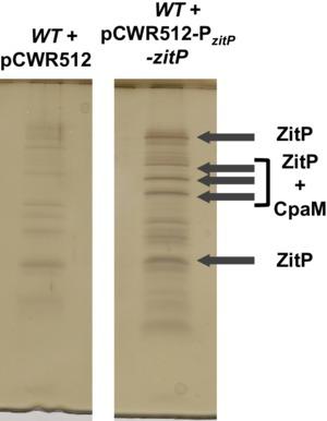 Figure 3—figure supplement 3.