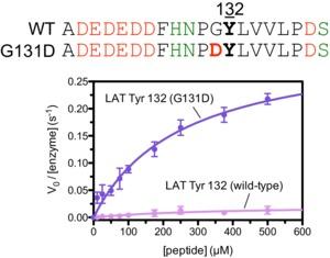 Figure 5—figure supplement 4.