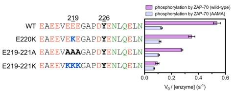 Figure 7—figure supplement 8.