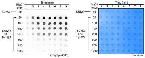 Figure 8—figure supplement 1.