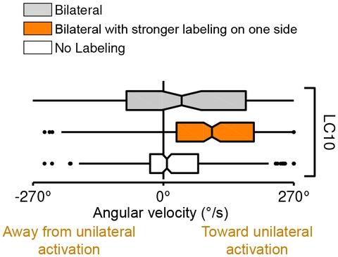 Figure 13—figure supplement 1.