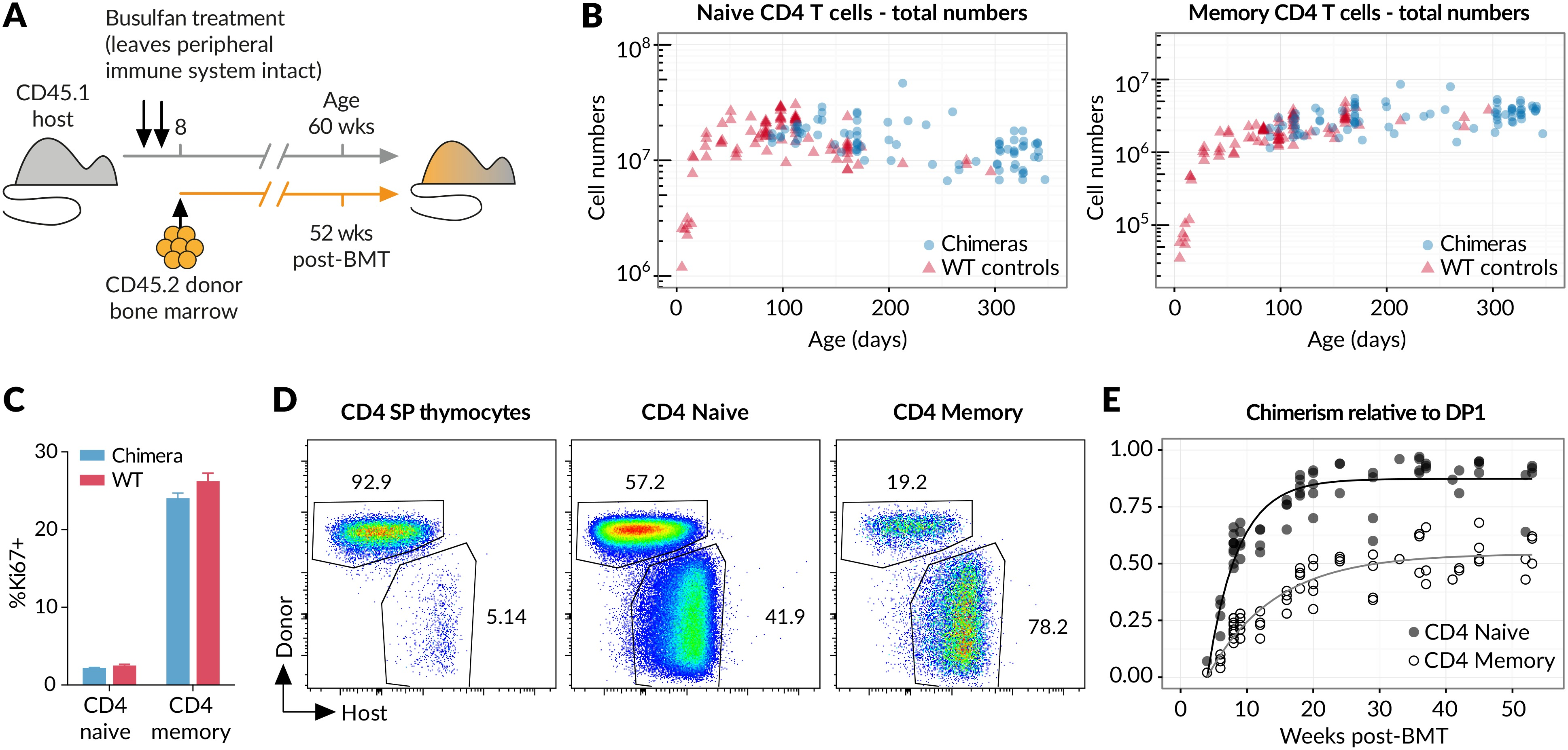 Memory CD4 T cell subsets are kinetically heterogeneous and ...