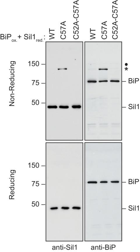Figure 2—figure supplement 5.