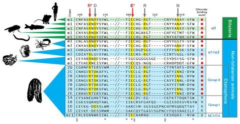 Figure 5—figure supplement 3.
