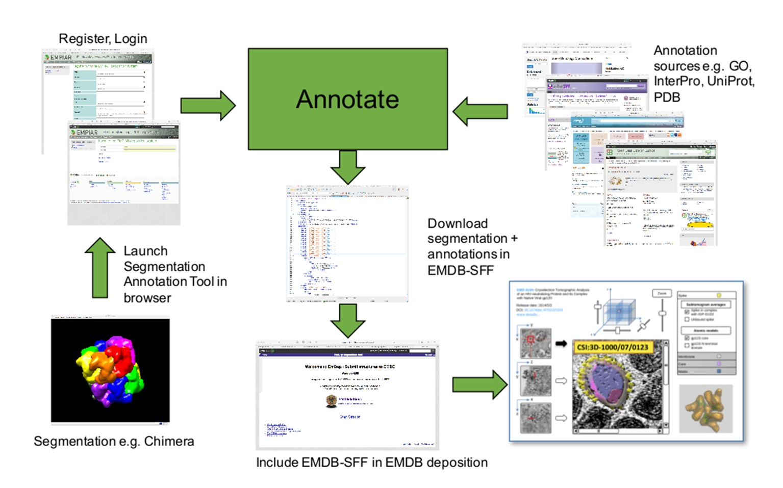 Building bridges between cellular and molecular structural biology