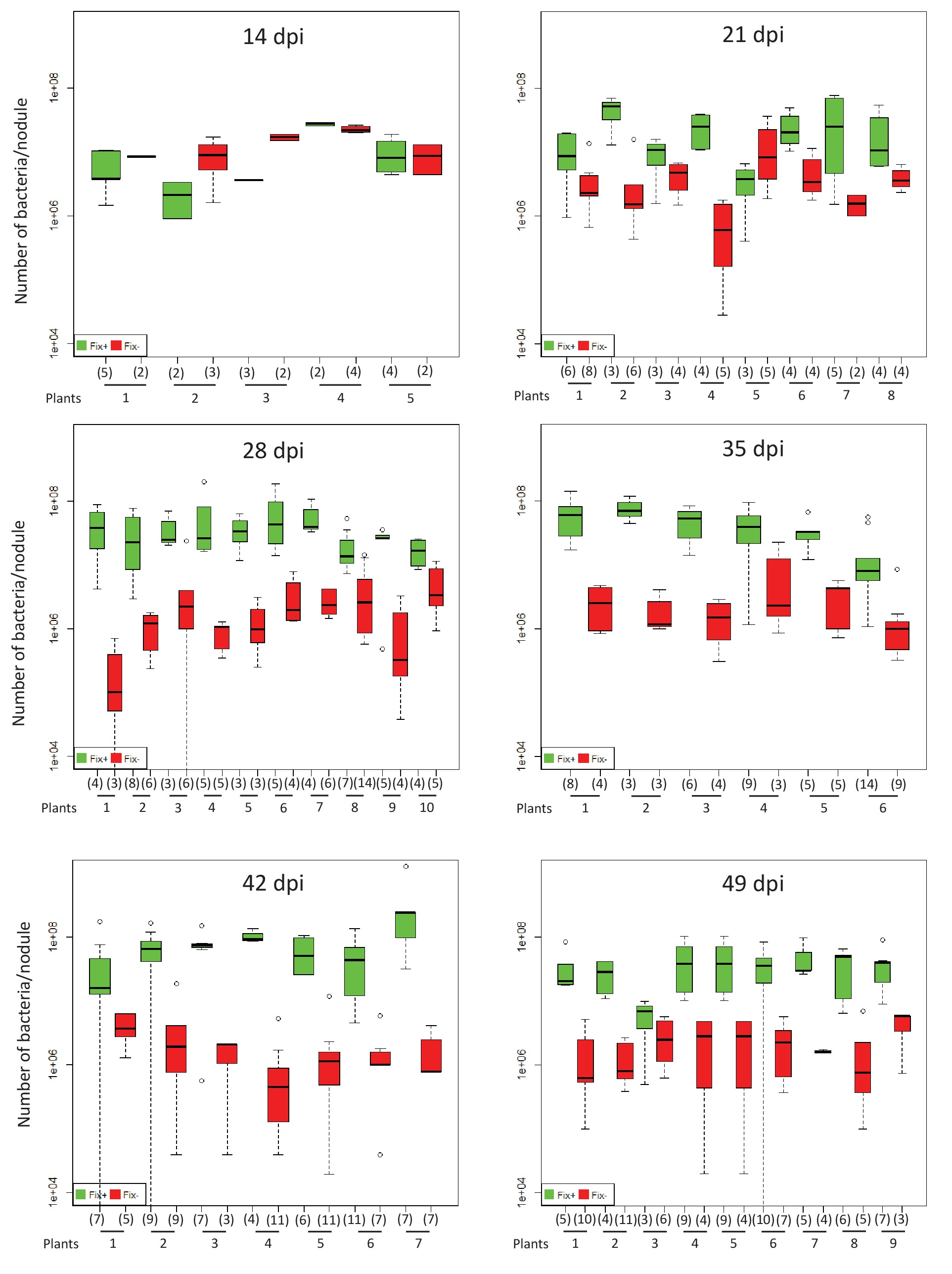 Spatio-temporal control of mutualism in legumes helps spread