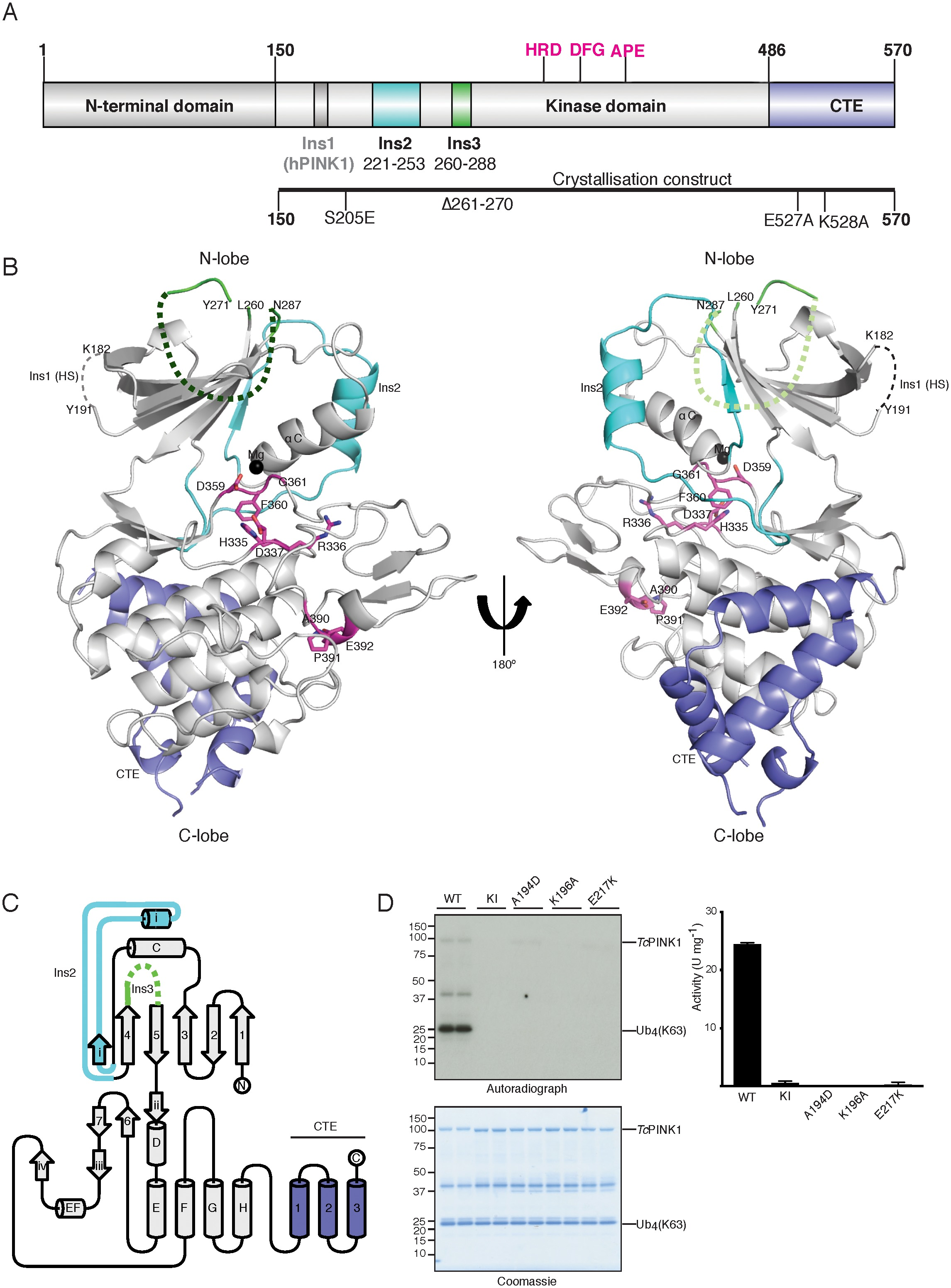 structure of pink1 and mechanisms of parkinson s disease associated rh lens elifesciences org