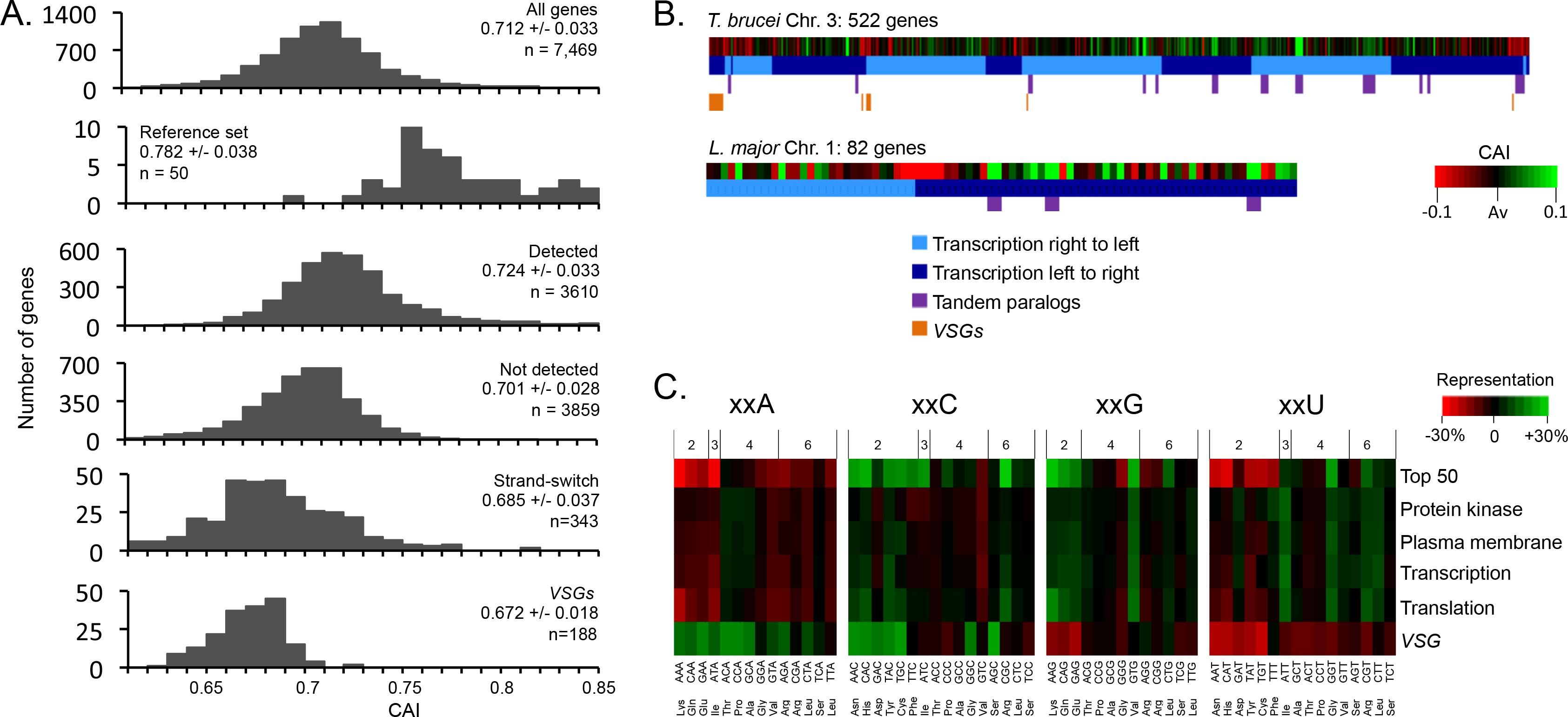 Codon usage bias controls mrna and protein abundance in genome scale analysis of codon usage bias malvernweather Choice Image