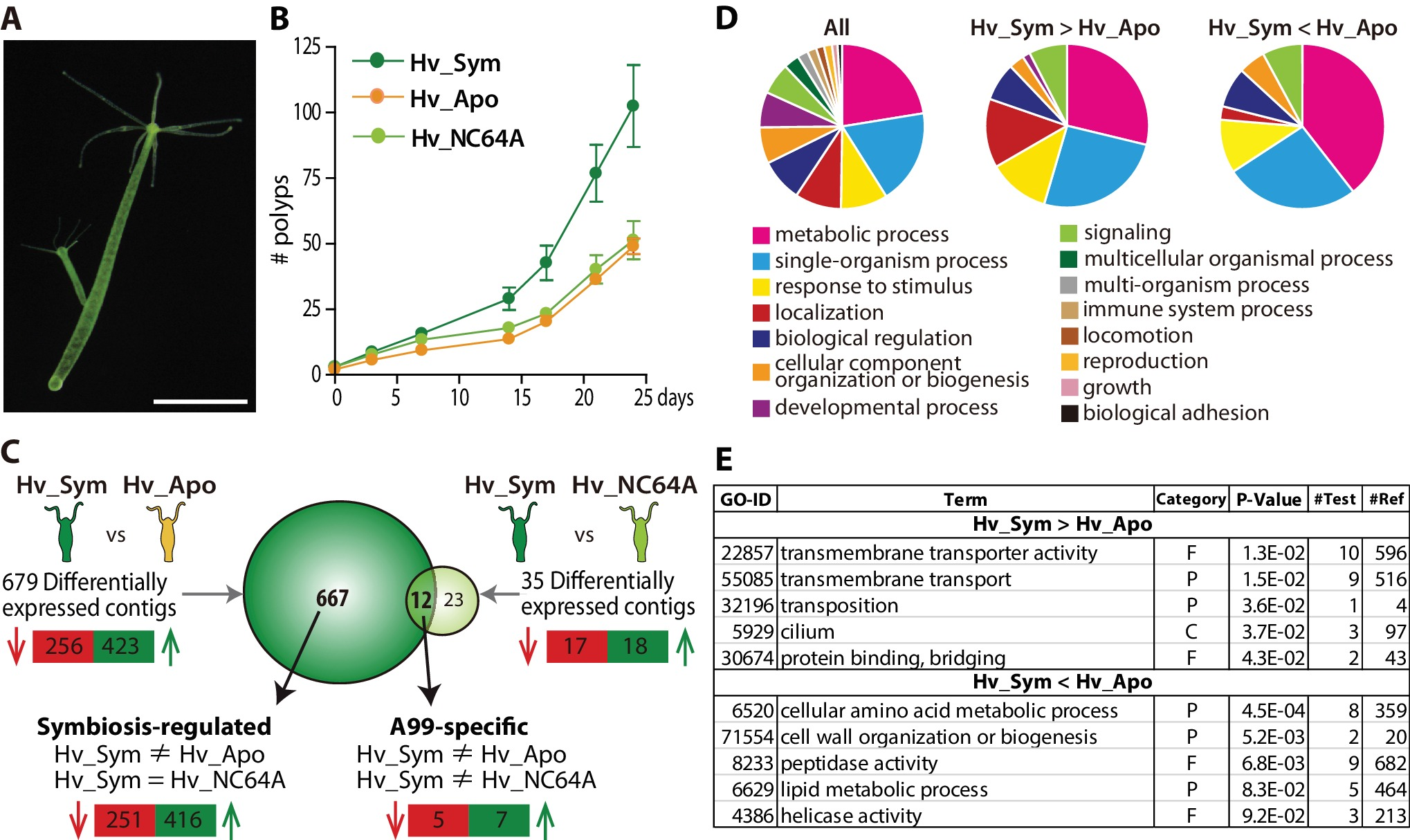 Metabolic Co Dependence Drives The Evolutionarily Ancient Hydra Biology Diagram Coelenterate Growth And Differential Expression Of Genes Resulting From Symbiosis