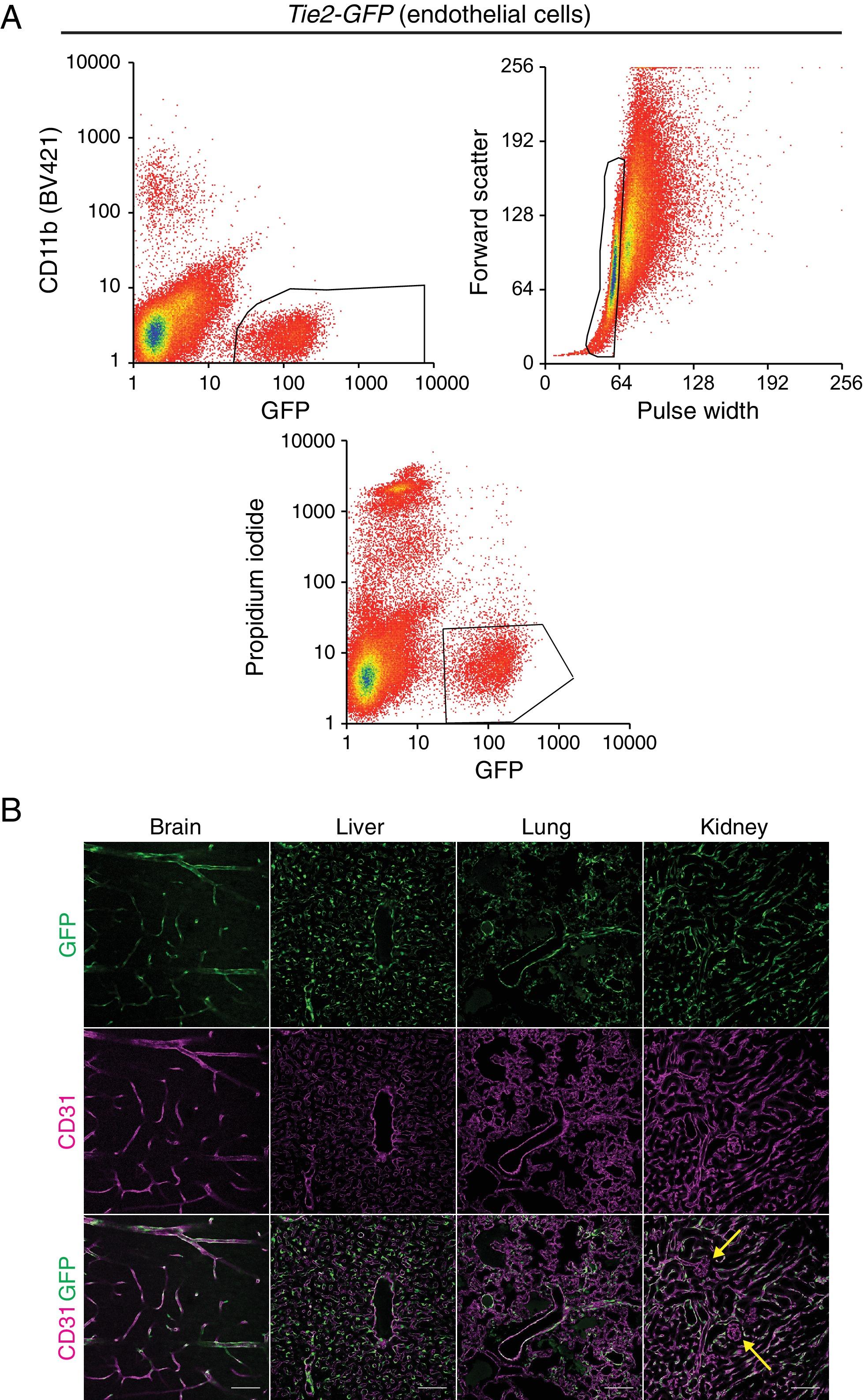 Transcriptional And Epigenomic Landscapes Of Cns Non Figure 28 8 Darlington Pairs Circuit A Pair Can 1figure Supplement 1