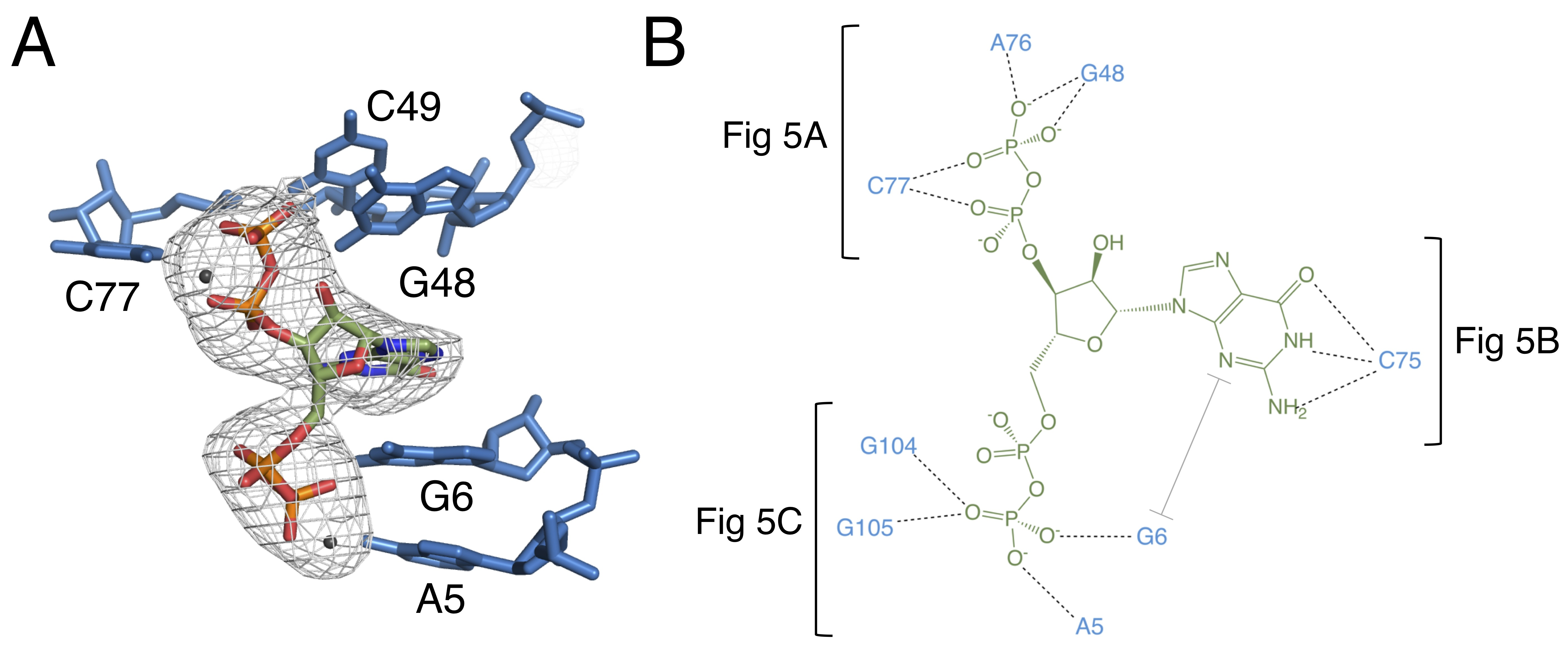 Structures Of Two Aptamers With Differing Ligand Specificity Reveal Figure 2910 Simple Rc Circuit 4