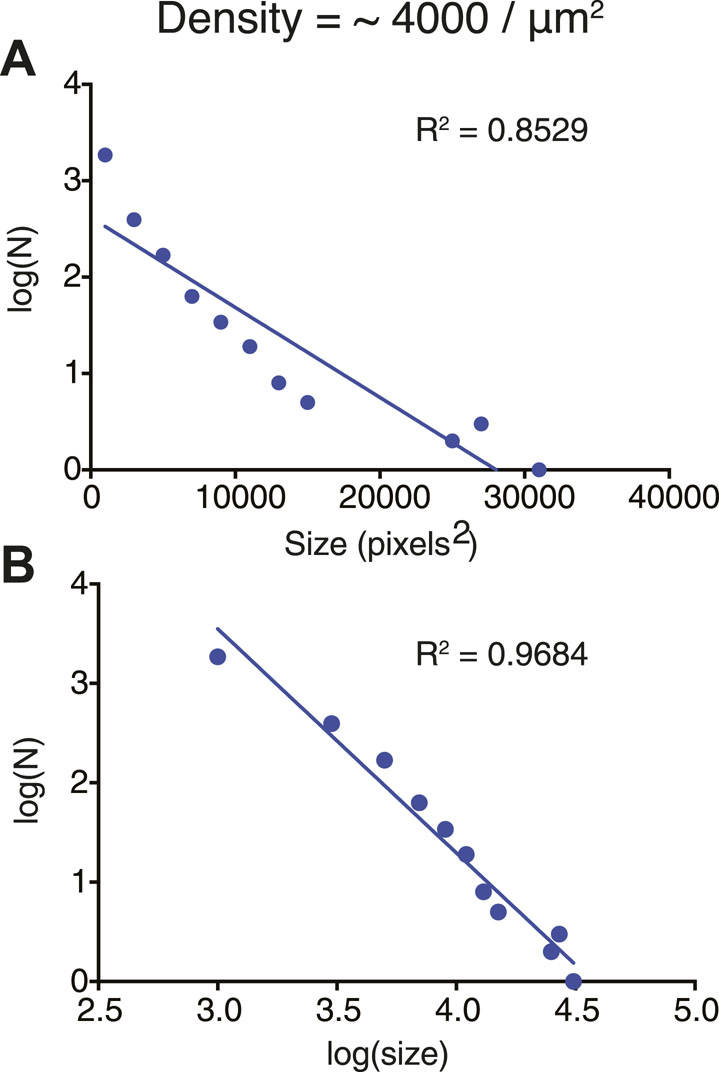Phase transitions of multivalent proteins can promote clustering ...